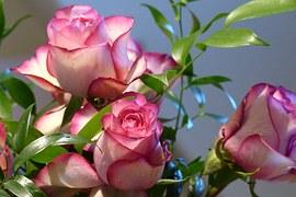 rose-687966__180